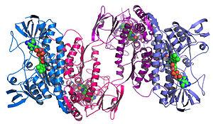Protein Structur